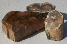 Petrified Wood - Raw